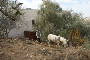 jordan plow horse